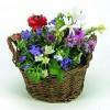 Weiden Körbchen Sommerblumen